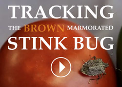 Tracking the Brown Marmorated Stink Bug