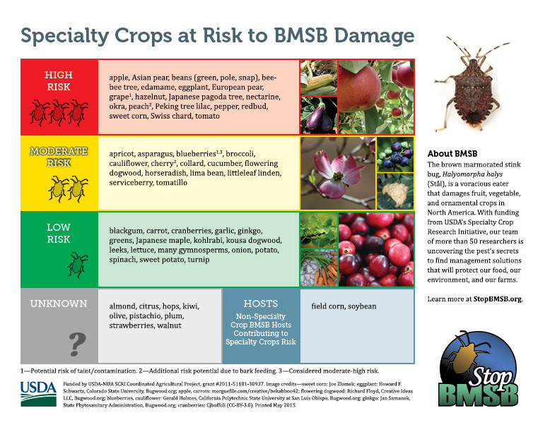 Specialty Crops at Risk to BMSB Damage