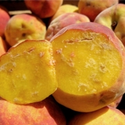 Internal damage in peaches.